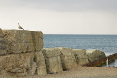 Old breakwater and seagull. Old breakwater near to Evpatoria, Crimea Stock Photo