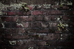Old  bric kwall Royalty Free Stock Images