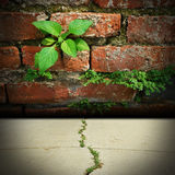 Old brick Background green leaf. Old brick green leaf orange wall background Royalty Free Stock Photography