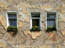 Old brick building wall with damaged plaster and three windows Stock Image