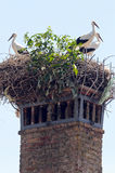 Old brick chimney with a white stork nest Stock Image