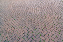 Old brick footpath background walk way. Royalty Free Stock Photography