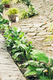 Old brick footpath in garden Royalty Free Stock Photography