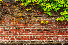 Old brick garden wall stock images