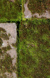 Old brick with green moss Stock Images