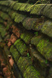 Old brick and moss Stock Images