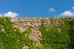 The old brick wall. Stock Images