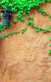 Old Brick Wall And Grape-vine Stock Image