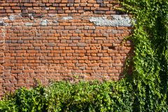 Old Brick Wall Background With Creeping Plants royalty free stock photography