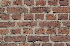 Old brick wall background or texture Royalty Free Stock Image
