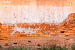 Old brick wall  background texture with weed. Royalty Free Stock Photography