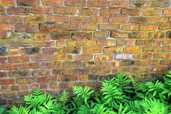 Old brick wall with bed of ferns Royalty Free Stock Images