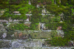 Old brick wall construction covered in green moss stock photography