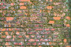 Old brick wall covered with moss Royalty Free Stock Image