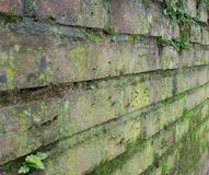 Old brick wall covered with moss. Royalty Free Stock Images