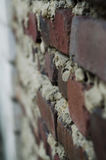 Old brick wall fragment. ! Vintage stock photos
