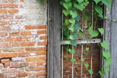 Old brick wall with green foliage . Stock Photos