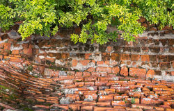 The old brick wall and green leaves Royalty Free Stock Photography