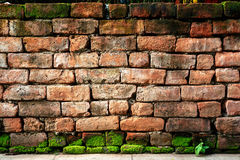 Old brick wall with green moss Stock Image