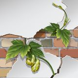 Old brick wall. And hops. Background, texture Vector Stock Photo