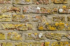 Old brick wall with lichen royalty free stock photo