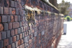 An old brick wall Stock Images