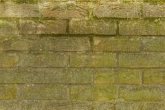Old brick wall moss Stock Image
