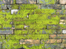Old Brick Wall with Moss Stock Photos