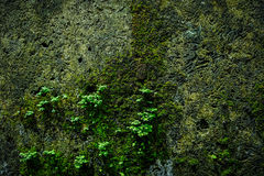 Old brick wall with moss growing texture of old stone wall cover Stock Images