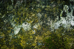 Old brick wall with moss growing texture of old stone wall cover Stock Photo