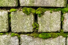 An old brick wall overgrown with green moss Royalty Free Stock Photography