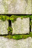 An old brick wall overgrown with green moss Royalty Free Stock Images