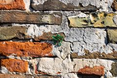 Old brick wall with the plant growing out of it - Image stock images