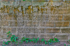 Old brick wall. Racked concrete vintage brick wall background Stock Photography
