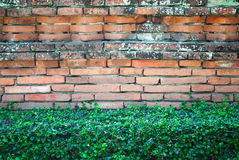 Old Brick Wall with Shrub Stock Images