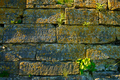 Old brick wall - texture Royalty Free Stock Images