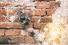 Old brick wall texture and background. Stock Photography