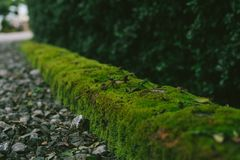 Old brick wall texture with fern. Along the way stock images