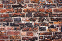 Old brick wall texture. Royalty Free Stock Images