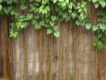 Old brick wall with the tree Stock Image