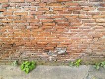 Old brick wall tree Royalty Free Stock Photos