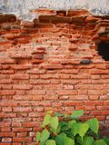 Old brick wall and tree. In an abandoned church stock image