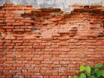 Old brick wall and tree Stock Photography
