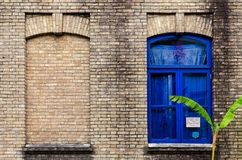 Old brick wall with two windows, one false, other with glass and blue color frame. Green plant near building. Batumi, Georgia stock photo