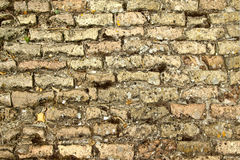 Old bricks floor Royalty Free Stock Photos