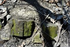 Old bricks with green moss on dry cracked ground texture with rotten leaves. Horizontal background stock photo