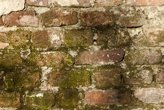 Old bricks moss wall. Old bricks damaged wall with moss as background stock photography