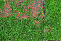 Old bricks on the pavement with some moss. Old bricks on the pavement with some partial moss covering and some copy space Stock Images