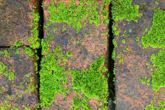 Old bricks on the pavement with some partial moss. Covering and some copy space Stock Photos