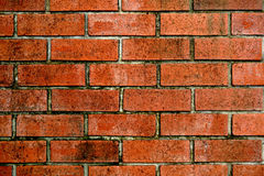 Old bricks wall Stock Images